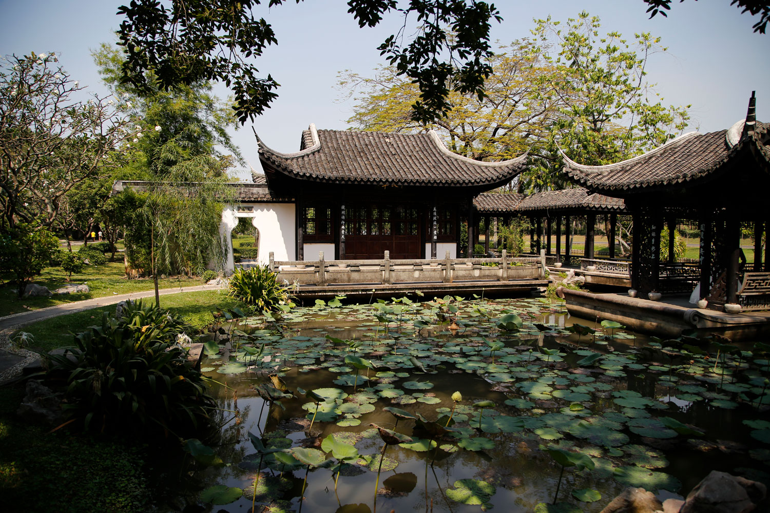 Temple pond filming location in Bangkok Thailand